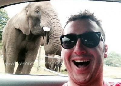 _75181088_rpy_elephant_selfie_03_2