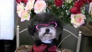 Secret – The World's Cutest Funniest Dog =D