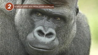 5 Animals Who Saved People From Death